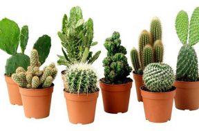 vasi-piante-grasse