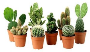 vasi piante grasse