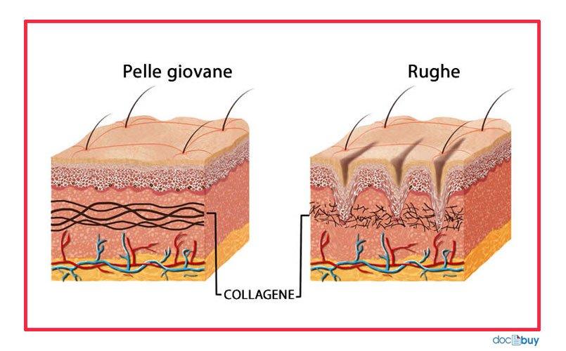 prodotti-antirughe-collagene