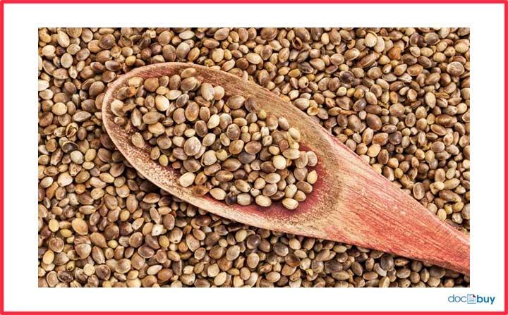 pianta di canapa semi di canapa